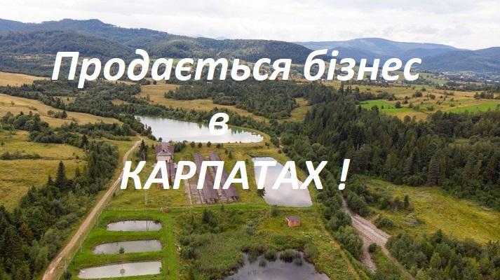 prodam_biznes_ryba (2)
